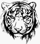 Eugen aka Tiger